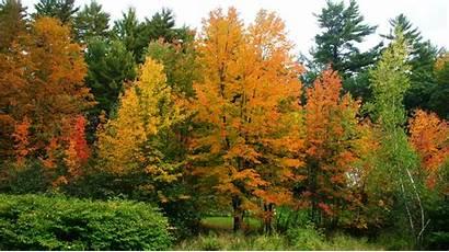 Fall Foliage Colors Conway North Nh Wonderful