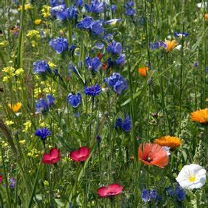 Lang Blühende Pflanzen : mehrj hrige bienenweide mischung inhalt reicht f r pflanzen oder 5 qm bio saatgut ~ Eleganceandgraceweddings.com Haus und Dekorationen