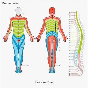 Spinal Nerve Dermatome Map