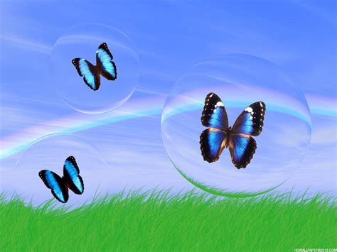 اجمل الفراشات في العالم حيوانات