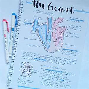 Biology B4 Aqa Gcse Combined Science Summary On The Heart