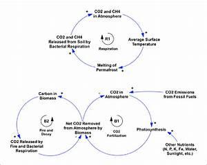 Causal Diagrams Illustrating Feedback Processes That