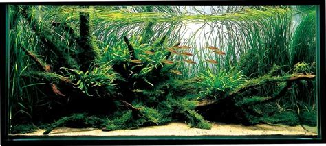Amano Aquascaping by Aquatic Aquascaping Aquarium
