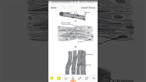It will help the students in learning complex topics and problems in an easy way. Class 9:Muscular tissue - YouTube