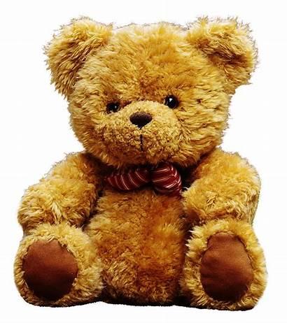 Teddy Bear Transparent Bears Toy Doll Background