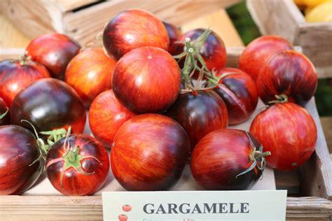 Gargamele (tomātu sēklas, 15 gab.) - Kolekcijas jaunākās ...