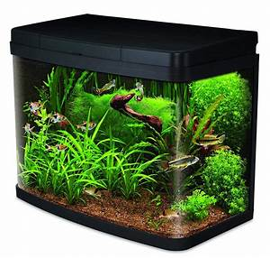 Aquarium L Form : is a 40 litre fish tank a good size aquatics world ~ Sanjose-hotels-ca.com Haus und Dekorationen