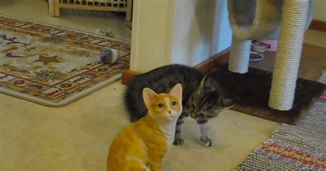 video kitten savagely attacks ceramic cat ny daily news