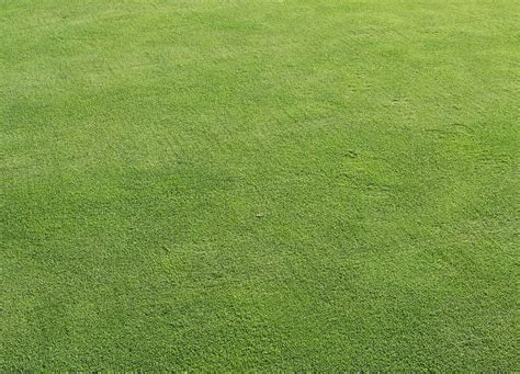 putting in a lawn purdue turf tips august 2014
