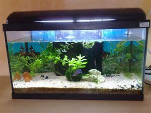 Fische Aquarium Hamburg : fische aquarien tieranzeigen seite 9 ~ Lizthompson.info Haus und Dekorationen