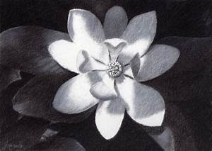 Magnolia Flower – New Charcoal Drawing | The Home Based ...