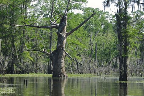 Boat Rental Atchafalaya Basin by New Orleans Boating Guide Boatsetter