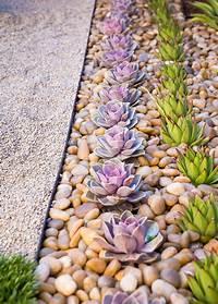 zen garden plants 8 Elements To Include When Designing Your Zen Garden ...