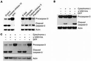 Serine protease activity is responsible for procaspase-3 ...