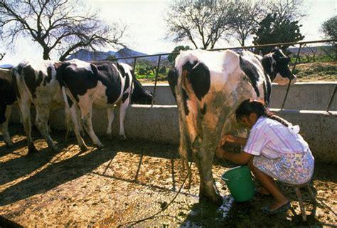 ground reality  dairy farming  unprofitable