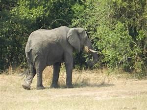 Animals of Murchison Falls National Park, Uganda | Tired ...