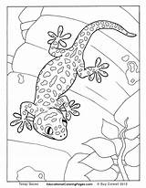 Gecko Coloring Pages Colouring Animal Lizard Gekko Creepers Realistic Cute Geckos Adult Kleurplaat Goanna Reptiles Animals Tokay Drawing Snake Sheets sketch template