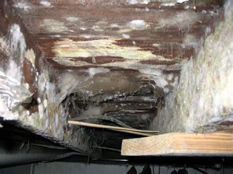 Mold Removal Ogden
