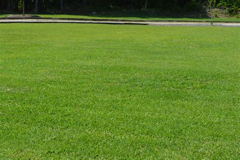 lawn care services   landscaping lawn care