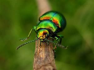 metallic green beetle | Flickr - Photo Sharing!