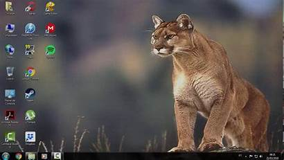 Wallpapers Lioness Backgrounds Windows 98 Background Desktop