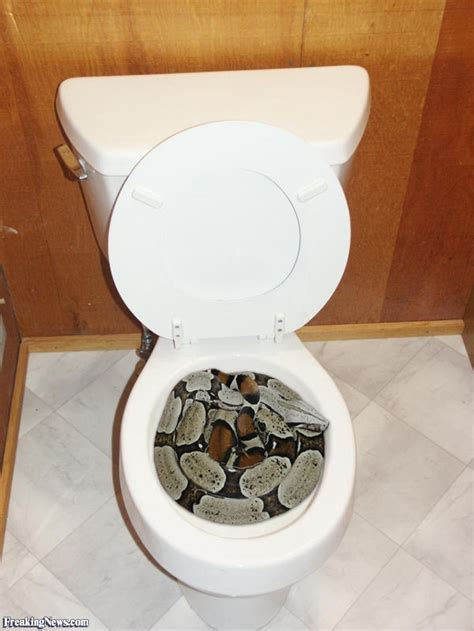 toilet snake pictures freaking news