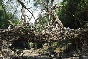 File:Living Root Bridge, Mawlynnong.jpg - Wikimedia Commons