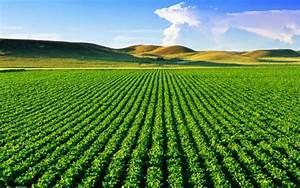 Pesquisa traça cenário favorável para o agronegócio brasileiro