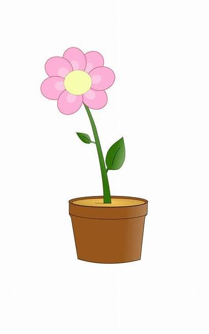Flower Clipart Pot Cartoon Blume Svg Blumentopf