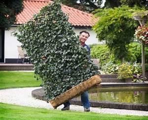 Sichtschutz Aus Pflanzen : sichtschutz im garten mit pflanzen gartengestaltung ideen ~ Michelbontemps.com Haus und Dekorationen
