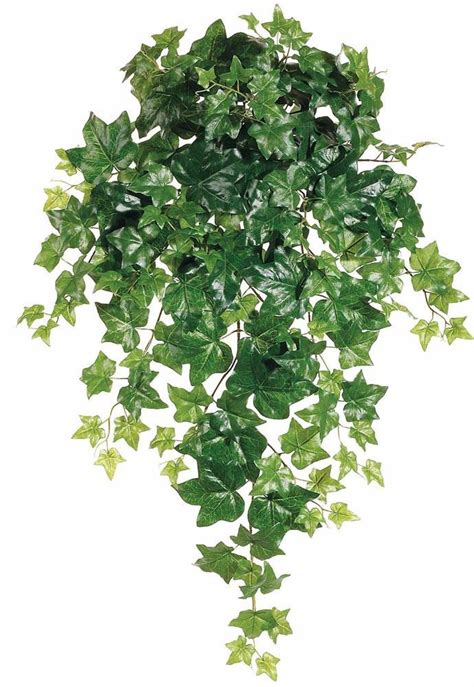 puff hanging bush in green afloral com same day shipping