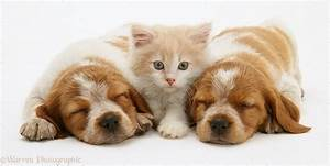 Cute Kittens And Puppies Sleeping Together Kitten With ...