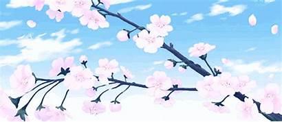 Anime Cherry Blossoms Scenery Blossom Falling Sakura