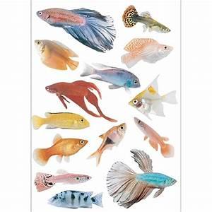 Animaux Décoration Intérieure : stickers autocollants poissons tropicaux d coration int rieure ~ Teatrodelosmanantiales.com Idées de Décoration