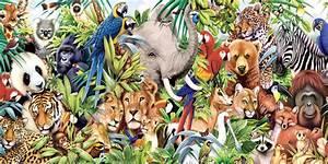 Hayvanlar hakkında doğru olduğunu düşündüğümüz 8 söylenti