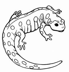 Salamander Clip Art - Cliparts.co