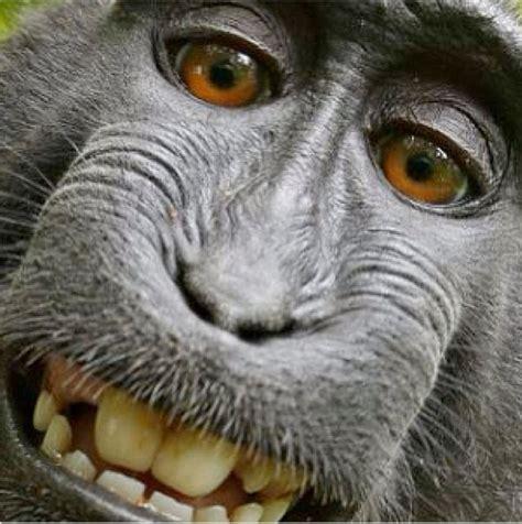 Jaunākais 'selfiju' hits: Dzīvnieki. Amizanti foto ...