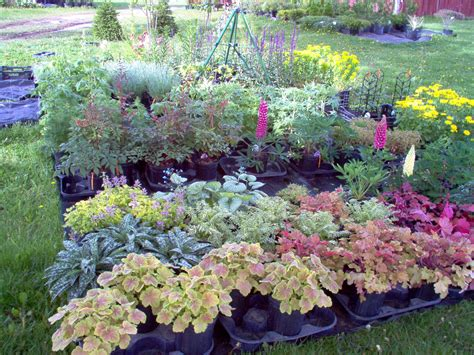 flowering shrubs for shade sun perennial shrubs 28 images purple perennial ground cover edge or as a small scale