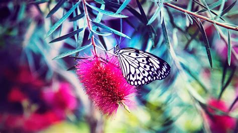 Beautiful Butterfly 5k Nature Wallpaper Hd Wallpapers