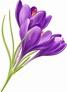Purple Flowers | Free Vector Graphic Download