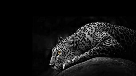 jaguar wallpapers wallpaper studio  tens