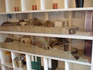 Meerschweinchen Gehege Ikea : amazing hamster cages awesome tortoise habitat hamster cages cage gerbil ~ Orissabook.com Haus und Dekorationen