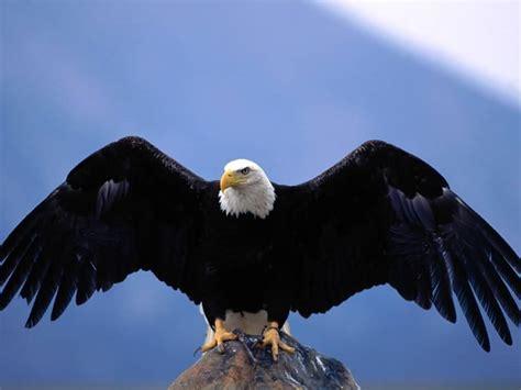 Heavenly Fragrance Soar Like An Eagle