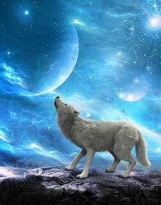 White Wolf Howling Moon, Moons Stock Image - Image of ...