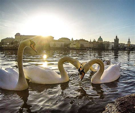 Cool Things To Do In Prague  Top Attractions And Hidden