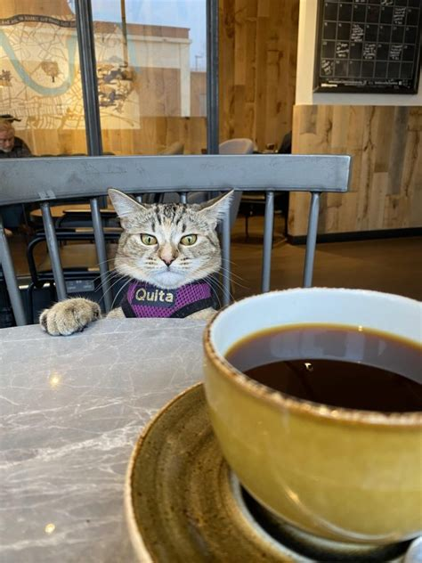 Decaf coffee stands for decaffeinated coffee, of course. Decaf for De Cat - CUTETROPOLIS
