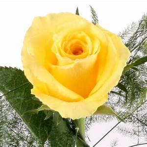 Rose Gelb Blumen Online Deutschlandweit Bestellen Mit