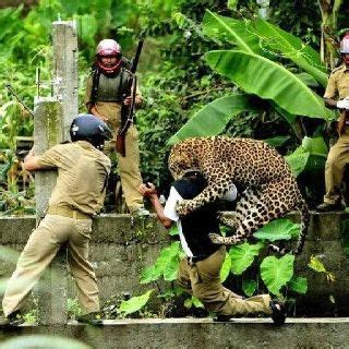 animal attack humans   learn  respect wild