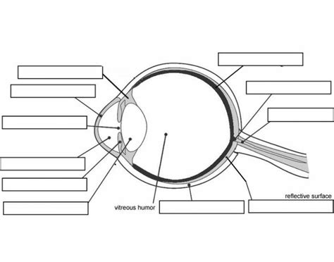 Eye Diagram For Quiz by Label The Parts Of The Eye Purposegames