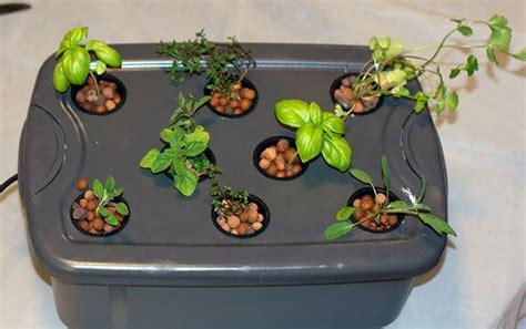 Grow Fresh Herbs Year Round